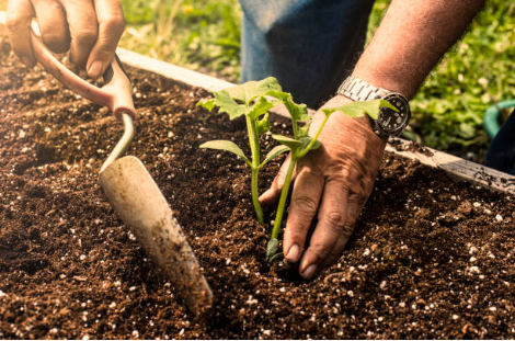 jardinage potager
